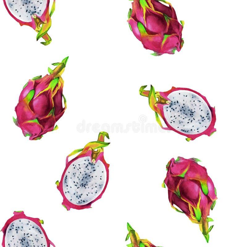 Teste padrão sem emenda do illustartion da aquarela do pitaya magenta ilustração do vetor