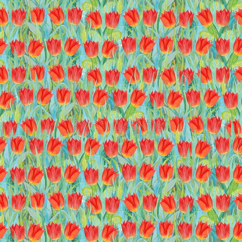 Teste padrão sem emenda do verão de tulipas vermelhas na grama Fundo colorido sob a forma de uma clareira da flor ilustração royalty free