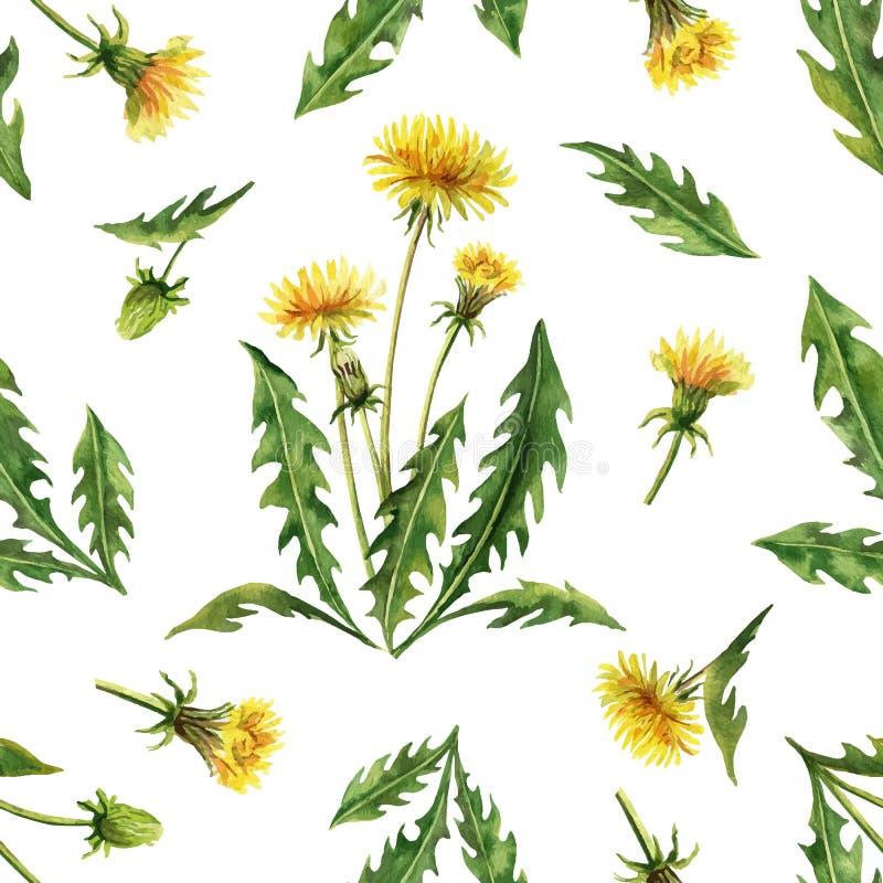 Teste padrão sem emenda do vetor da aquarela com as flores e as folhas do dente-de-leão isoladas no fundo branco ilustração royalty free