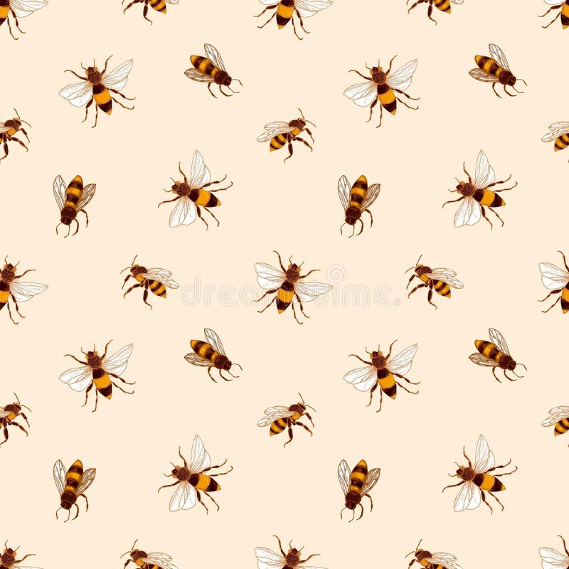 Teste padrão sem emenda elegante com as abelhas do mel no fundo claro Contexto da apicultura ou da apicultura Mão colorida tirada ilustração do vetor