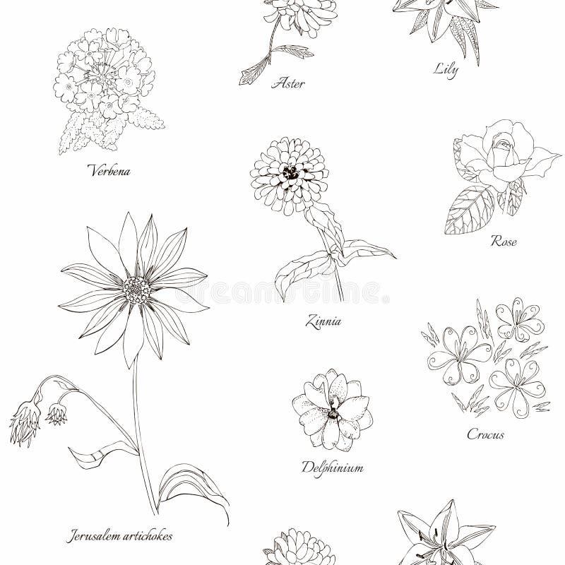 Teste padrão sem emenda floral bonito Flores preto e branco tiradas mão ilustração do vetor