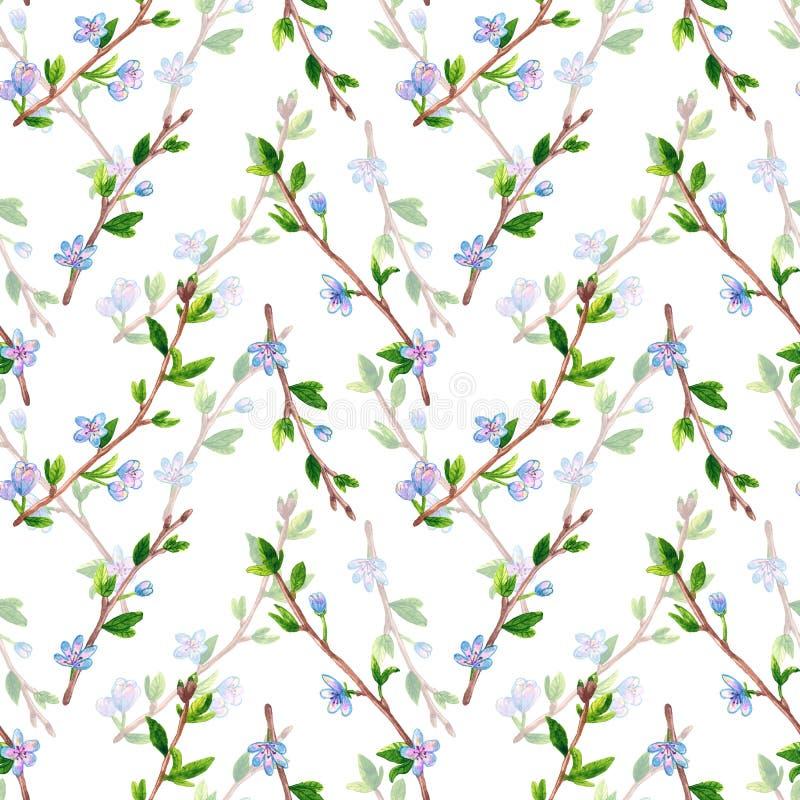 Teste padrão sem emenda floral com ramos da mola com flores Árvore de Apple ou de cereja Ilustra??o tirada m?o da aguarela ilustração do vetor