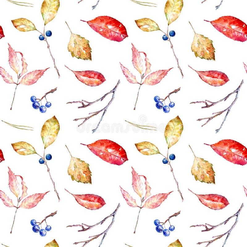 Teste padrão sem emenda floral das folhas de outono, aronia, espinheiro cerval ilustração do vetor
