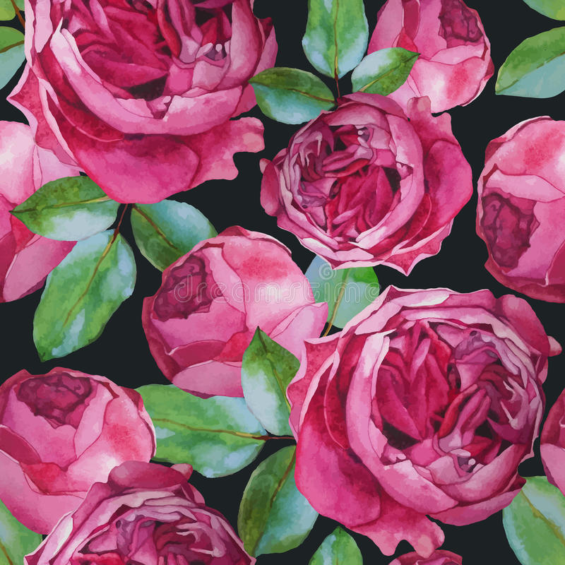 Teste padrão sem emenda floral do vetor com rosas da aquarela ilustração royalty free