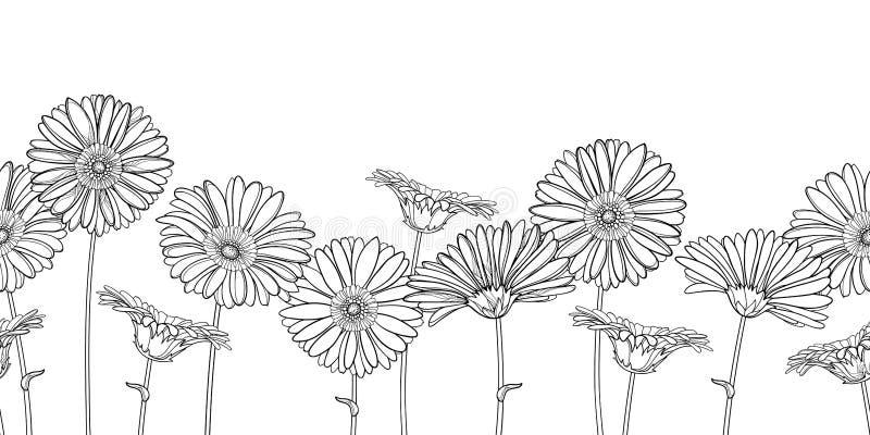 Teste padrão sem emenda horizontal do vetor com a flor do Gerbera ou do Gerber do esboço no preto no fundo branco Beira floral co ilustração do vetor