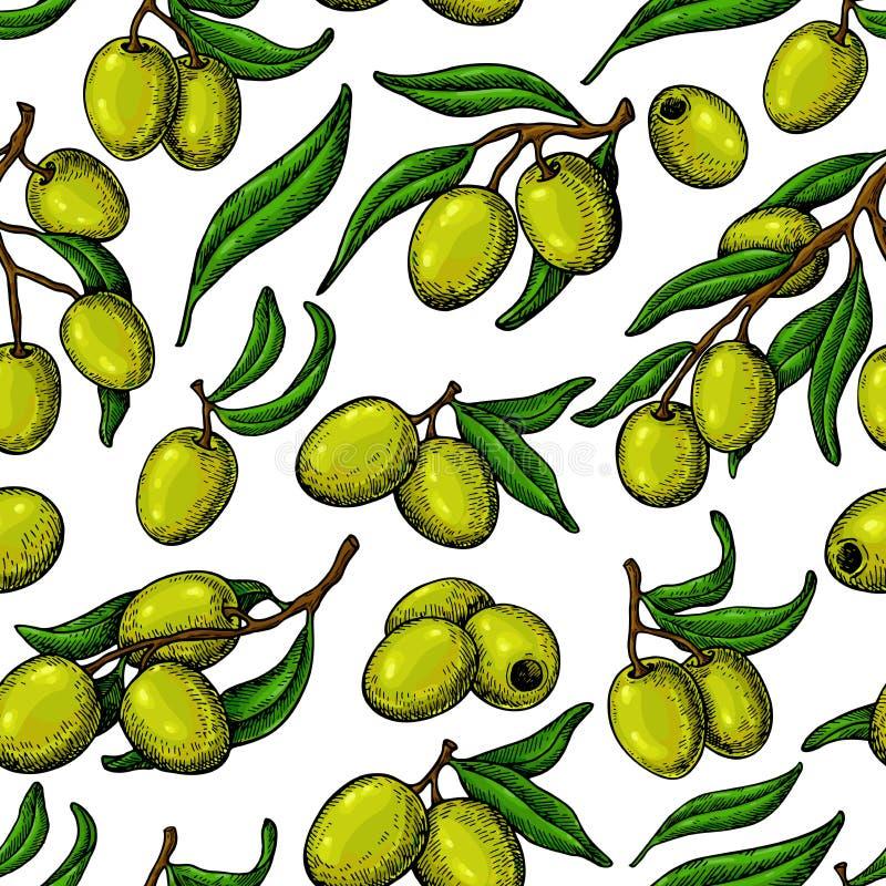 Teste padrão sem emenda verde-oliva Entregue o fundo tirado do vetor com ramo da oliveira verde ilustração royalty free