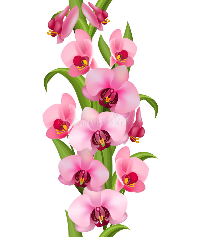 Teste padrão sem emenda vertical feito das orquídeas ilustração royalty free