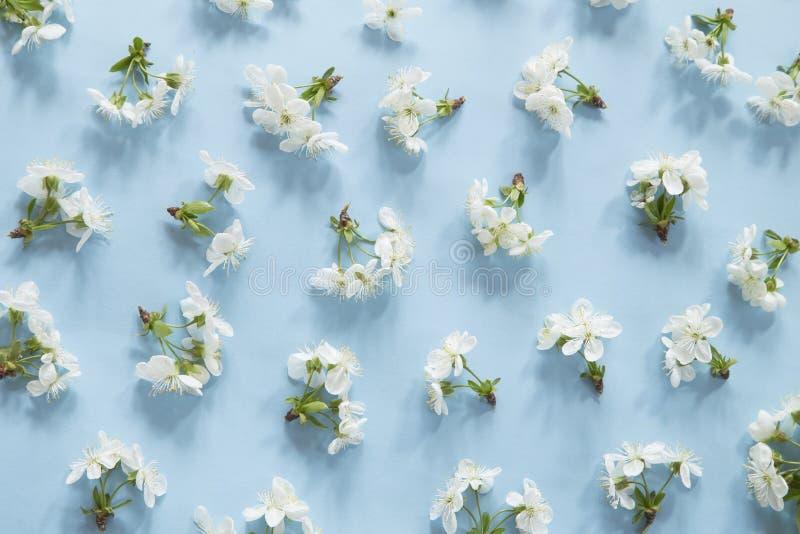 Teste padr?o da flor da mola fotografia de stock royalty free