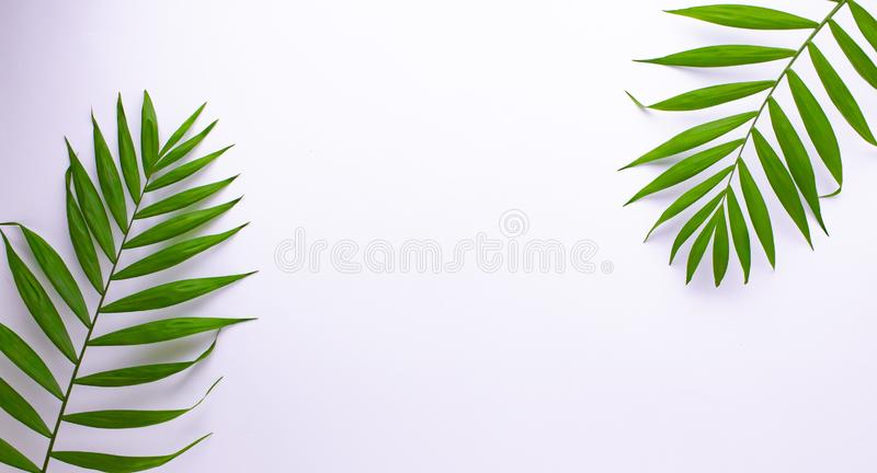 Teste padr?o das folhas verdes tropicais no fundo branco Configura??o lisa, vista superior ilustração royalty free
