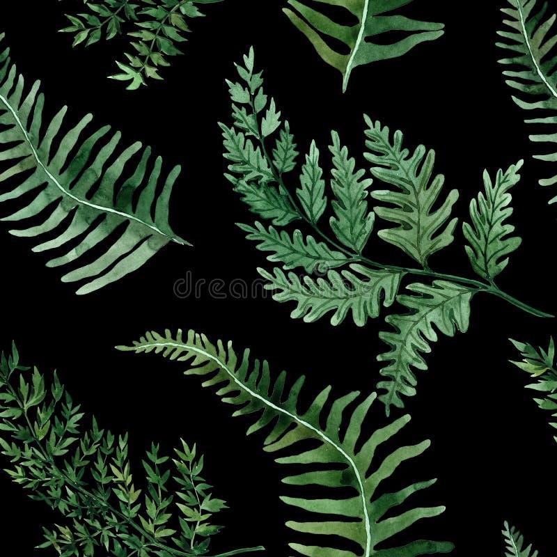 Teste padr?o sem emenda da aquarela com folhas tropicais e folhas dos houseplants greenery succulent Ilustra??o floral do projeto ilustração royalty free