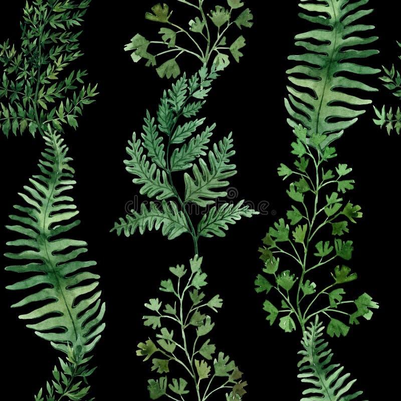 Teste padr?o sem emenda da aquarela com folhas tropicais e folhas dos houseplants greenery succulent Ilustra??o floral do projeto ilustração stock