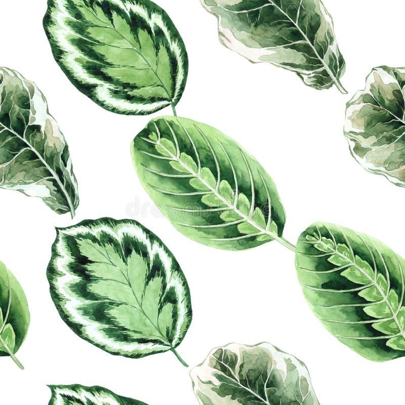Teste padr?o sem emenda da aquarela com folhas tropicais e folhas dos houseplants greenery succulent Ilustra??o floral do projeto ilustração do vetor