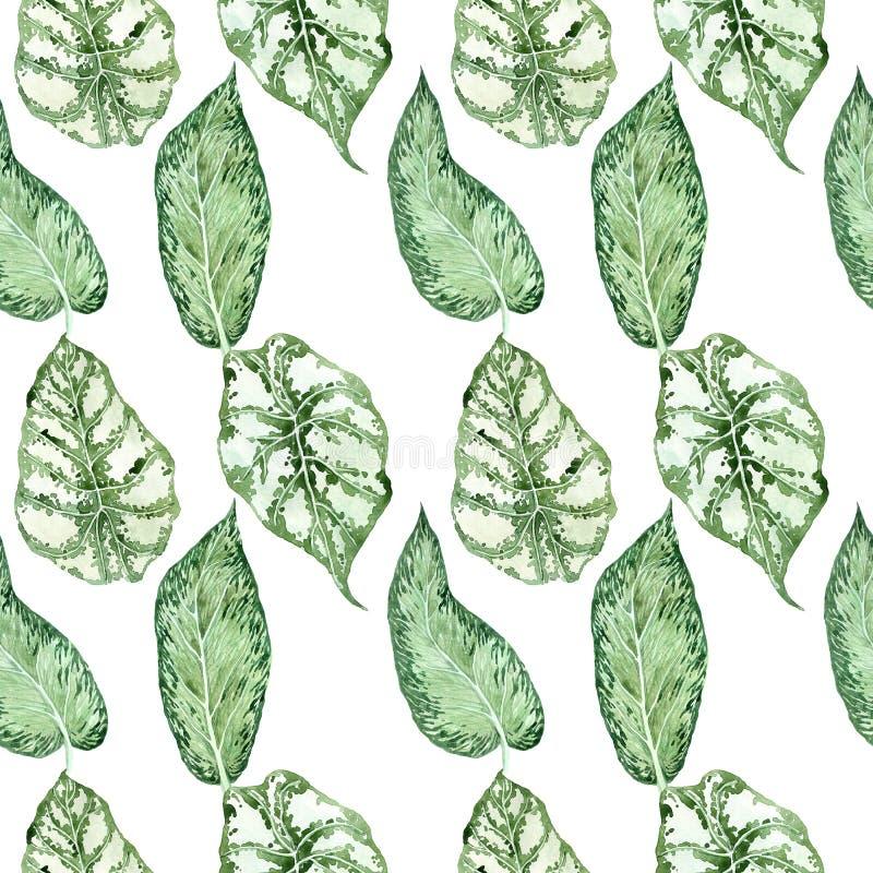 Teste padr?o sem emenda da aquarela com folhas tropicais e folhas dos houseplants greenery succulent ilustração royalty free