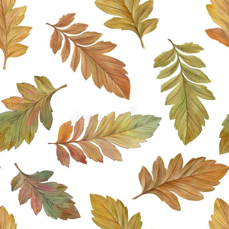 Teste padr?o sem emenda das folhas de outono em um fundo branco ilustração do vetor