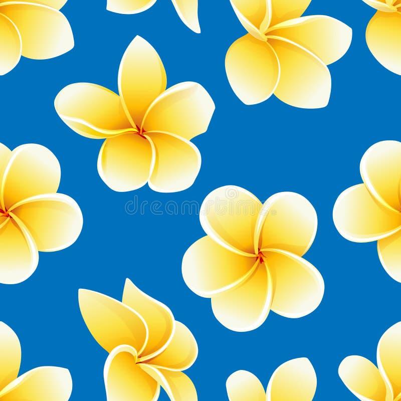 Teste padr?o sem emenda do vetor com a flor do Plumeria ou o Frangipani no azul ilustração do vetor
