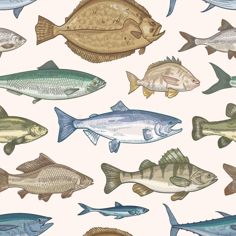 Teste padr?o sem emenda elegante com tipos diferentes de peixes no fundo claro Contexto com os animais marinhos ou de água doce ilustração stock