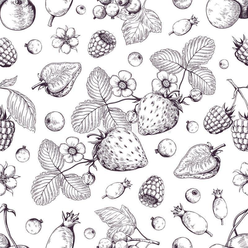 Teste padr?o tirado m?o das bagas Desenho de esboço do arando da amora-preta da morango da cereja da floresta do vintage Menu da  ilustração stock