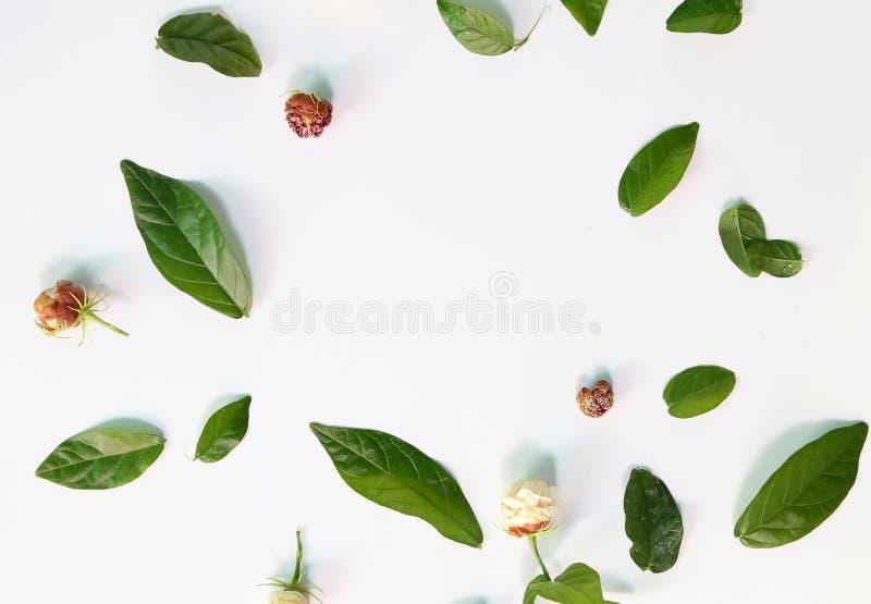 Testes padrões com folhas, jasmim, fundo branco, configuração lisa, a vista superior fotografia de stock