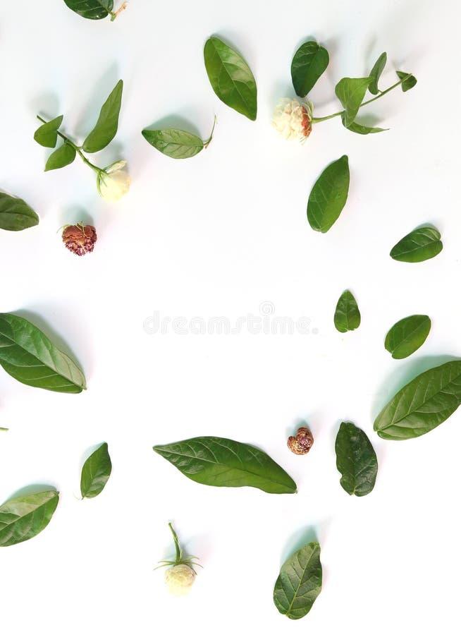 Testes padrões com folhas, jasmim, fundo branco, configuração lisa, a vista superior foto de stock royalty free