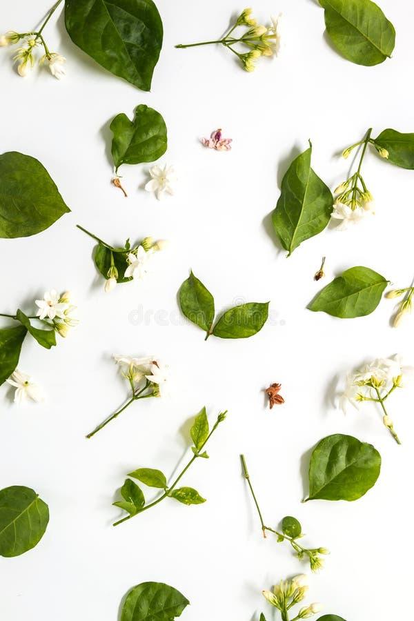 Testes padrões com folhas, jasmim, fundo branco, configuração lisa, a vista superior fotos de stock royalty free