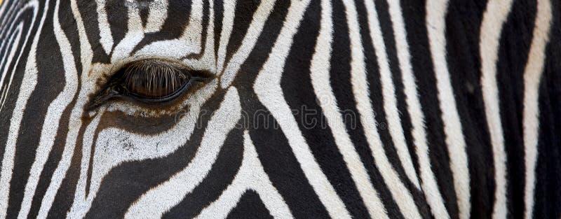 Testes padrões da zebra imagens de stock royalty free