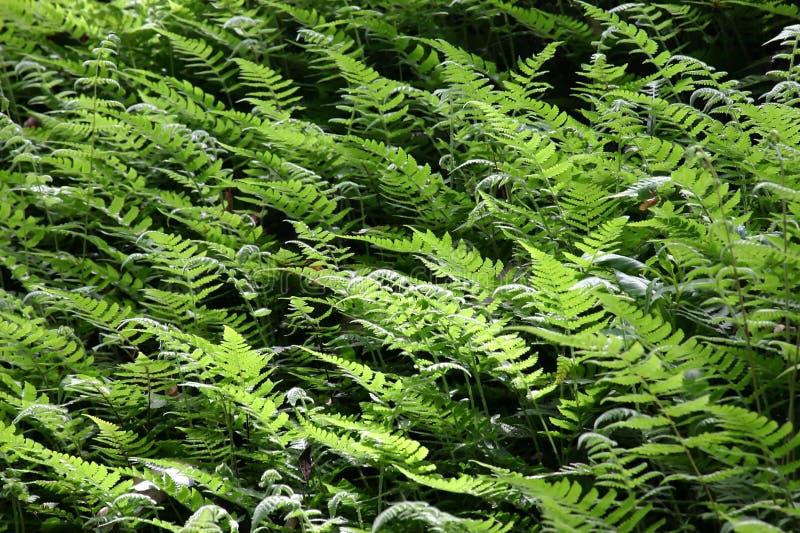 Testes padrões das folhas fotografia de stock