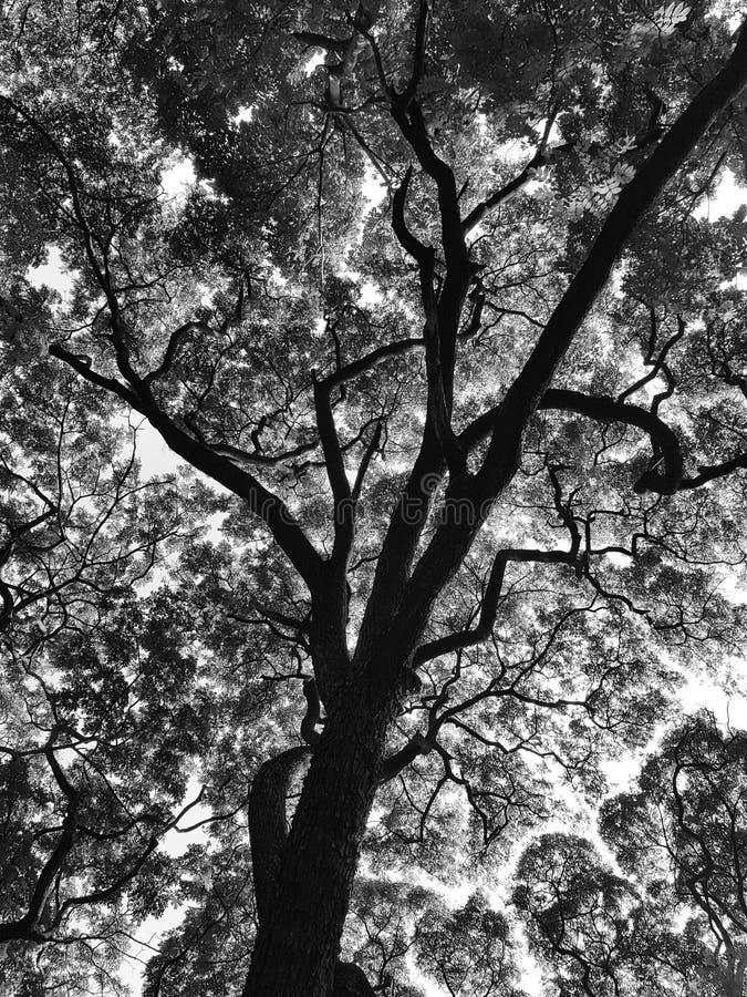 Testes padrões de um ramo de árvore em preto e branco imagem de stock royalty free