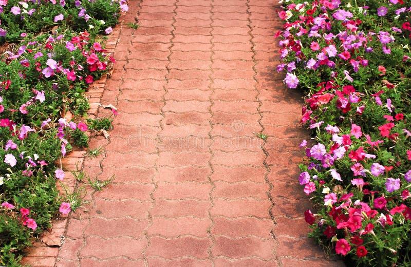 Testes padrões do pavimento do tijolo e flores coloridas do hybrida do petúnia que florescem no lado, fundo decorativo da naturez foto de stock