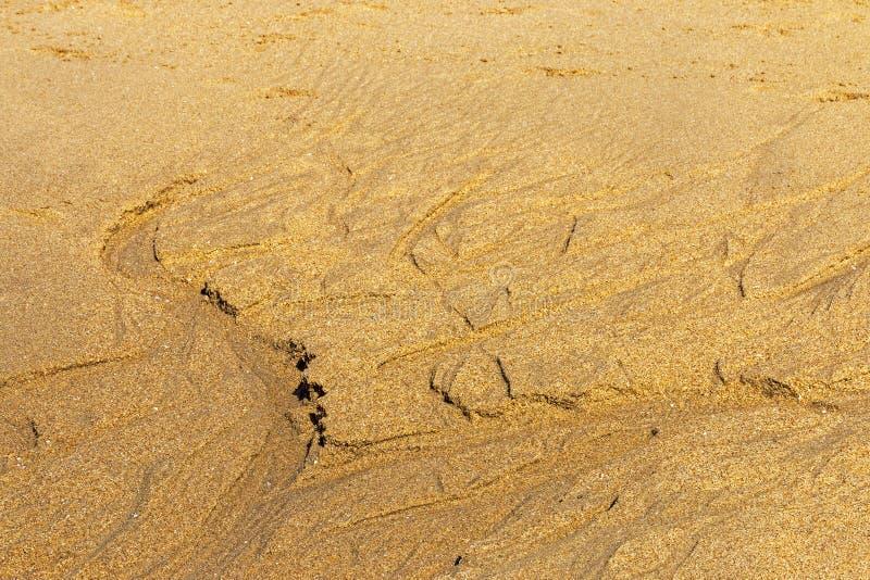 Testes padrões e texturas naturalmente formados na areia molhada da praia fotografia de stock royalty free