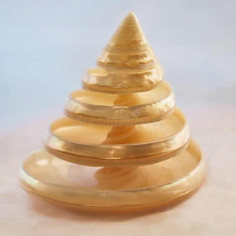 Testes padrões na natureza - Trochus Shell