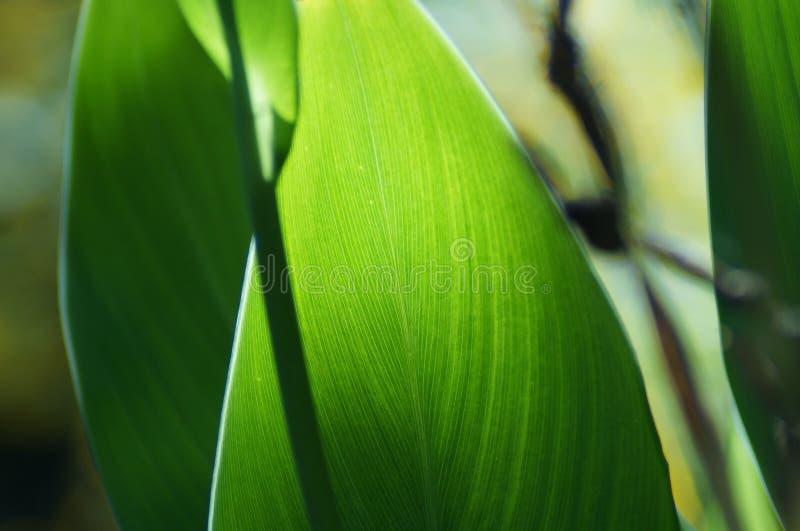 Testes padrões nas folhas imagem de stock