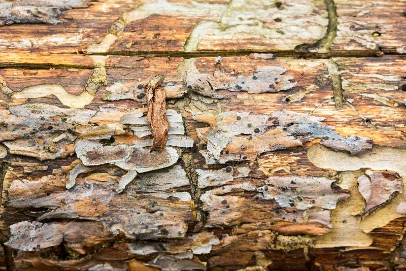 Testes padrões naturais bonitos da textura de madeira brilhante imagem de stock royalty free
