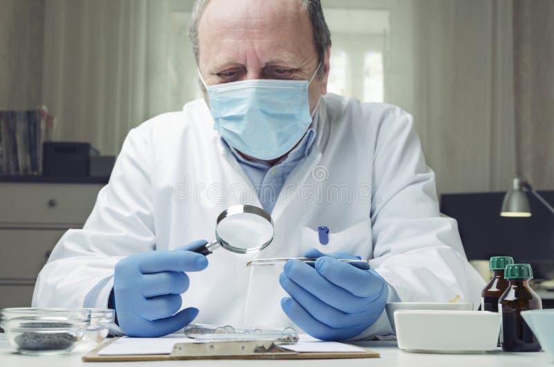 Testes profissionais do assistente de laboratório e sementes cheking O conceito do laboratório pesquisa para a qualidade cheking  imagem de stock royalty free