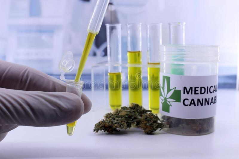Testing cannabis buds for the extraction royalty free stock photography