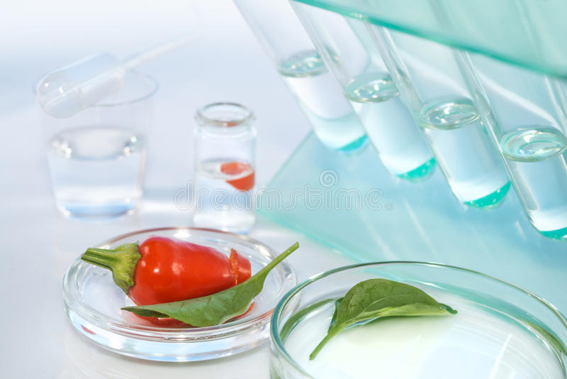 Testing red peppers for contamination with pesticides stock images