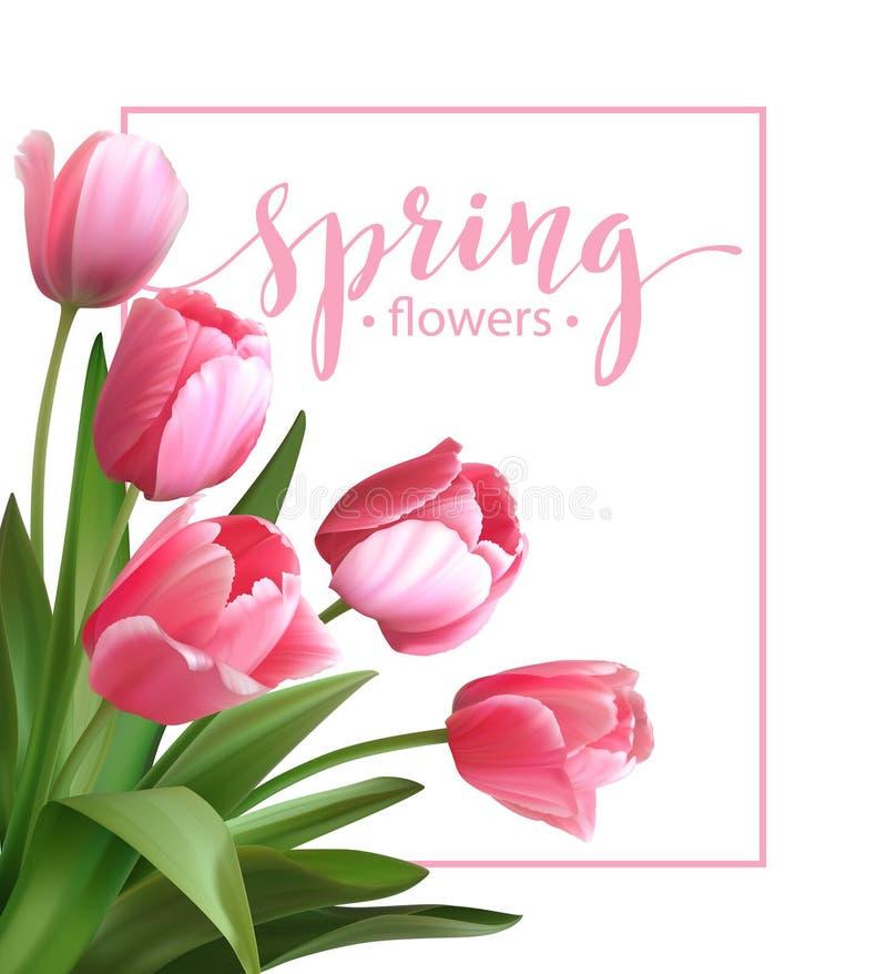 Testo della primavera con il fiore del tulipano Vettore illustrazione vettoriale