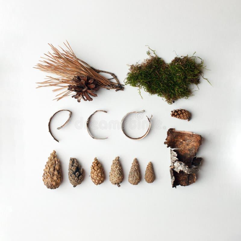 Testo organico naturale di Eco dai deteails della foresta su fondo bianco, ecologico, iscrizione di ecologia, minimalismo concett fotografia stock libera da diritti