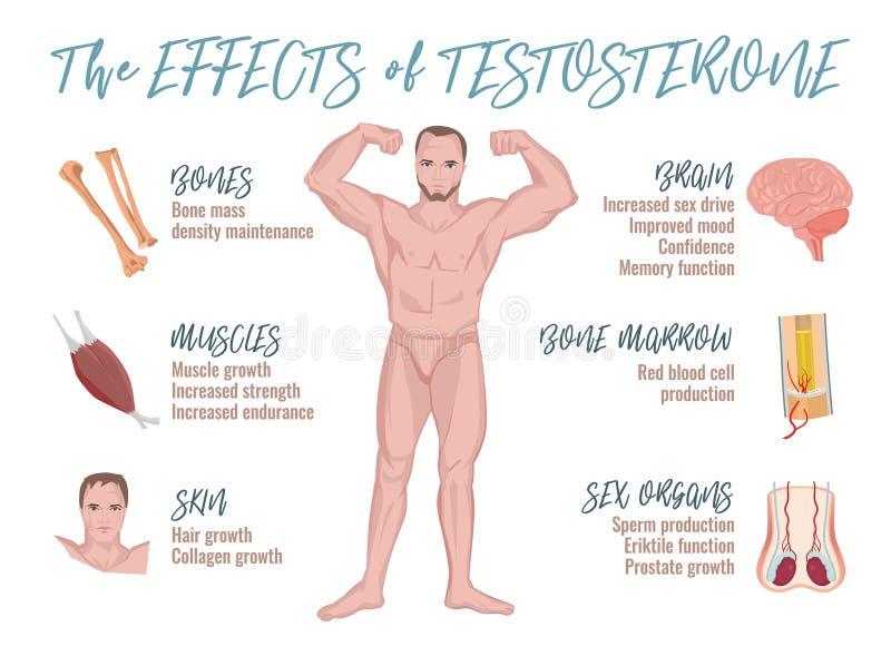 Testosteron verkställer Infographics royaltyfri illustrationer