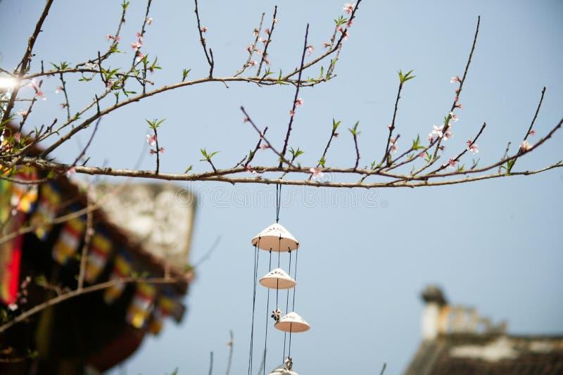 Tet nel Vietnam 2019 - bonsai fotografia stock libera da diritti