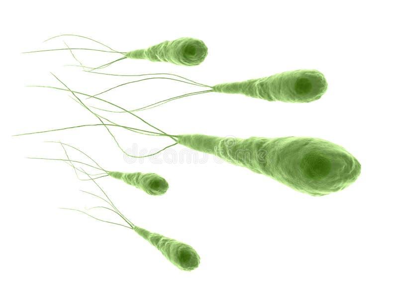 Tetanus bacteria royalty free illustration