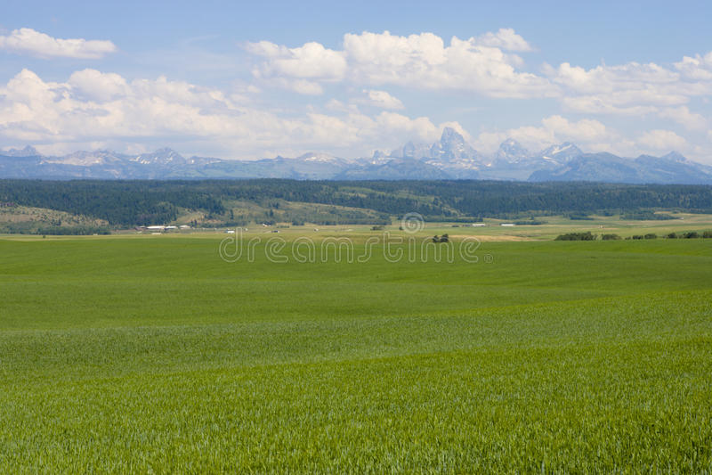 teton выгона горы поля зеленое стоковое фото