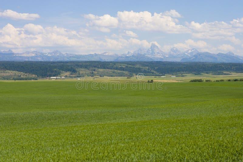 Teton Berg mit grüner Weide und Feld stockfoto