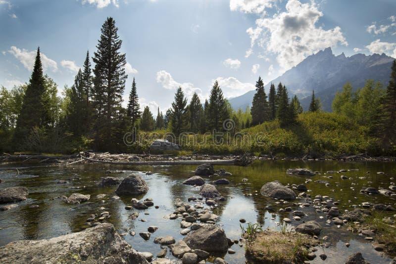 Teton berg och sörjer träd, poppelliten vik, Jackson Hole, royaltyfri fotografi