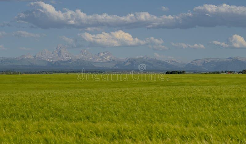 Teton berg och vetefält royaltyfria foton