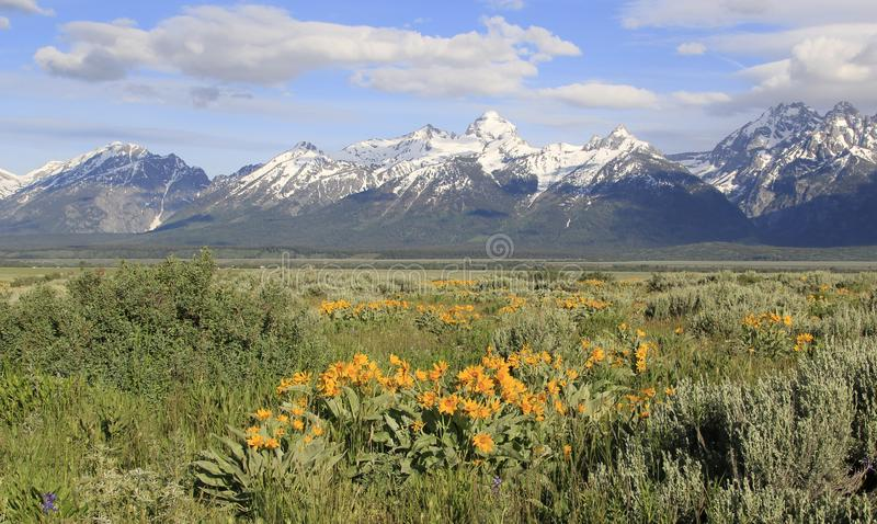The Tetons snow capped mountains , USA stock images