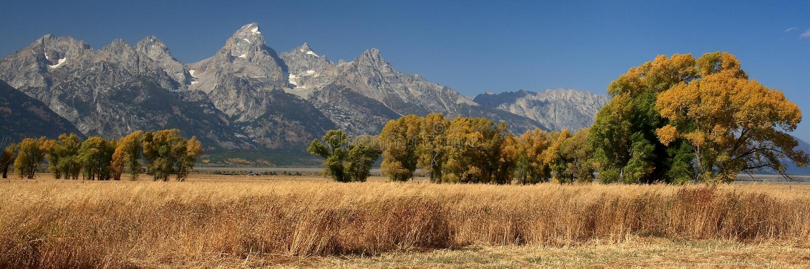 Tetons and Trees royalty free stock images