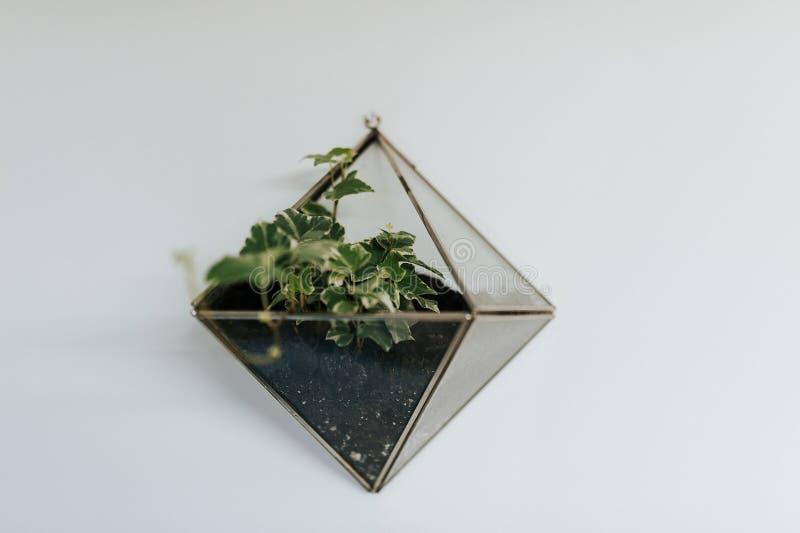 Tetragonal Glass Terrarium on White Floor stock photography