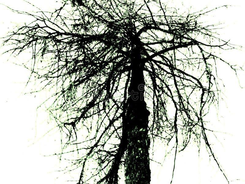 Tetric drzewo zdjęcia stock