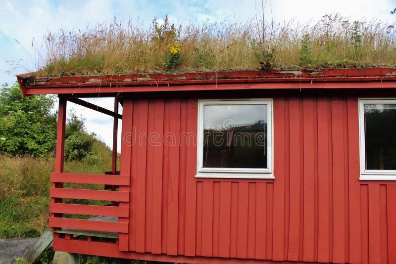 Tetto che si inverdisce in Norvegia, Scandinaiva, Europa fotografia stock libera da diritti