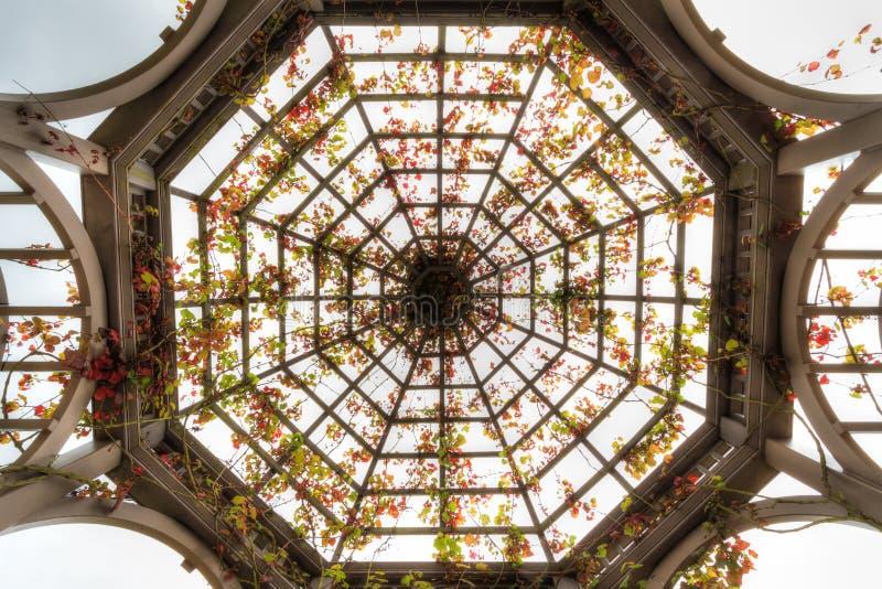 Tetto della pergola a cupola con Autumn Crimson Glory Vine immagine stock